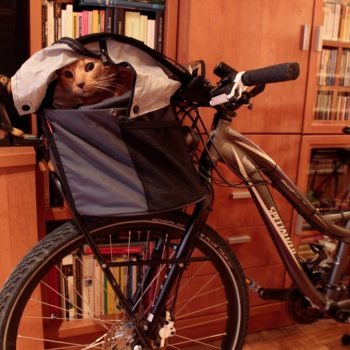 Foto del gato Montu pasea su felina rebeldía en la bolsa Doggy de Rixen Kaul